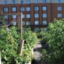 Membership Advisory regarding the relocation of the GSA Community Garden